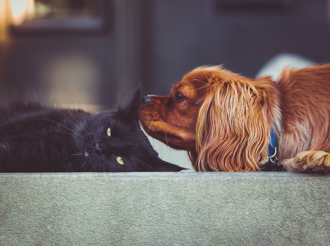 Dog and cat hanging out