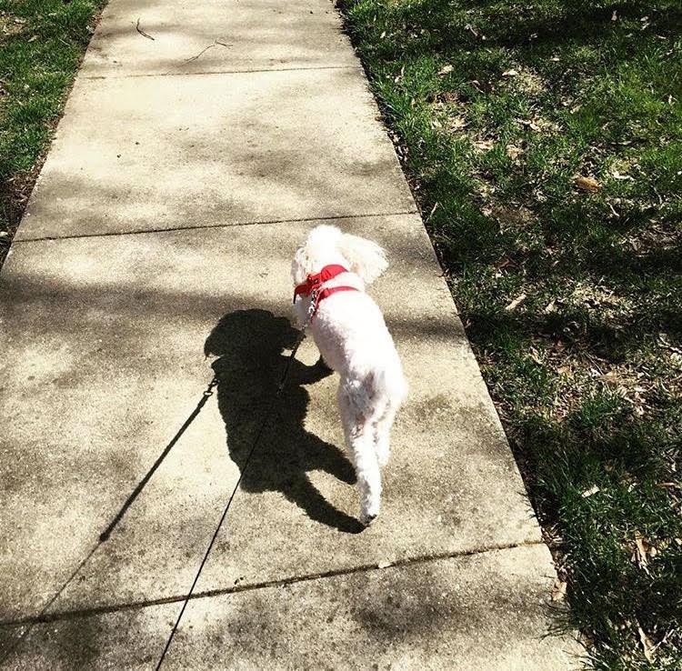 Savannah on a walk