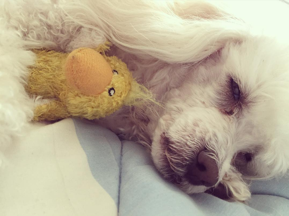 Savannah taking a nap with Duckie