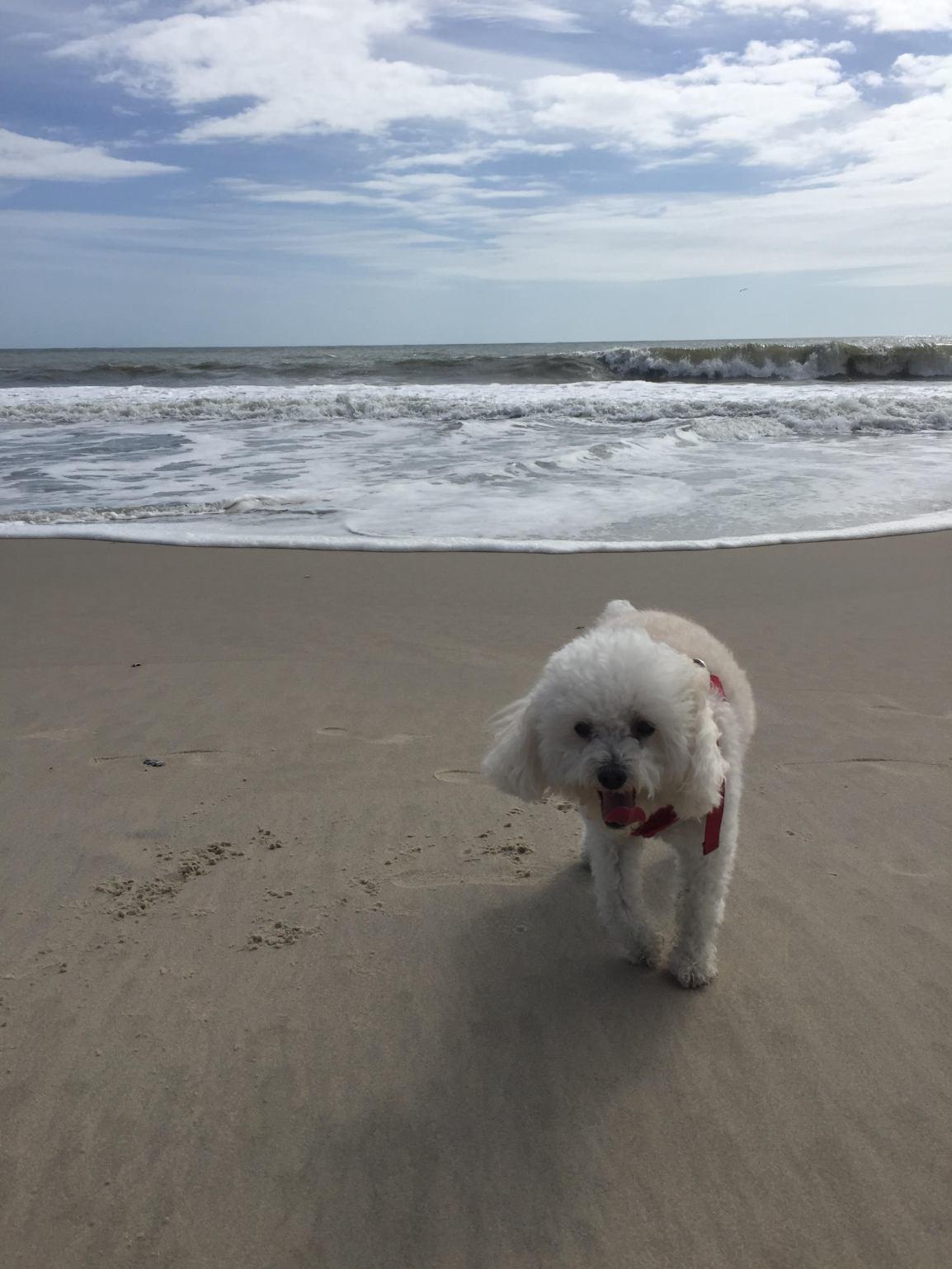 Savannah at the beach